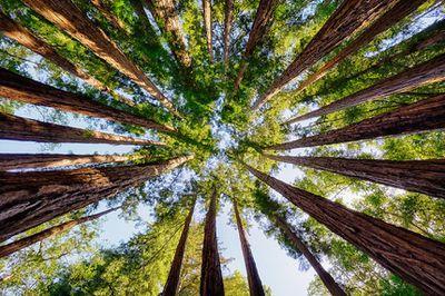Trees communicate