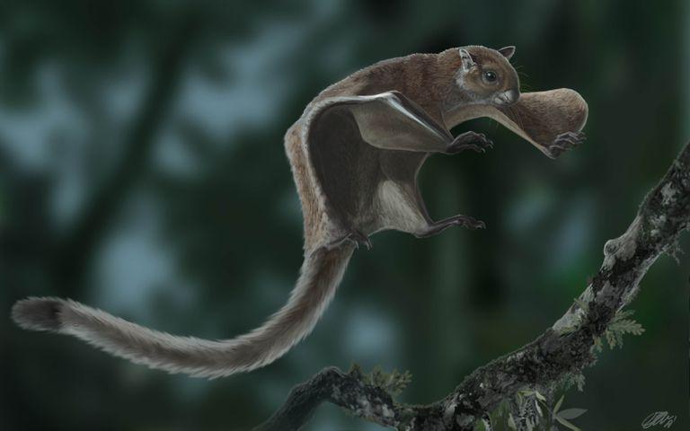Descubrimiento: Las ardillas voladoras no han cambiado en 12 millones de años