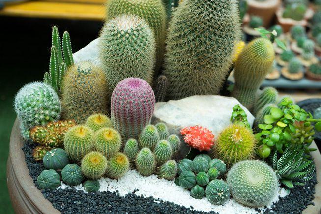 A garden tray featuring succulents