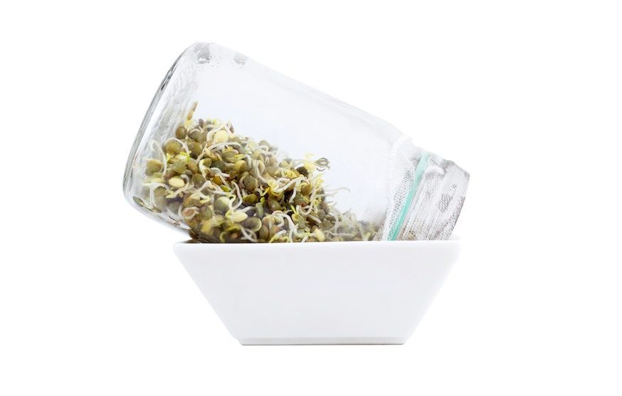 sprouts growing in a jar