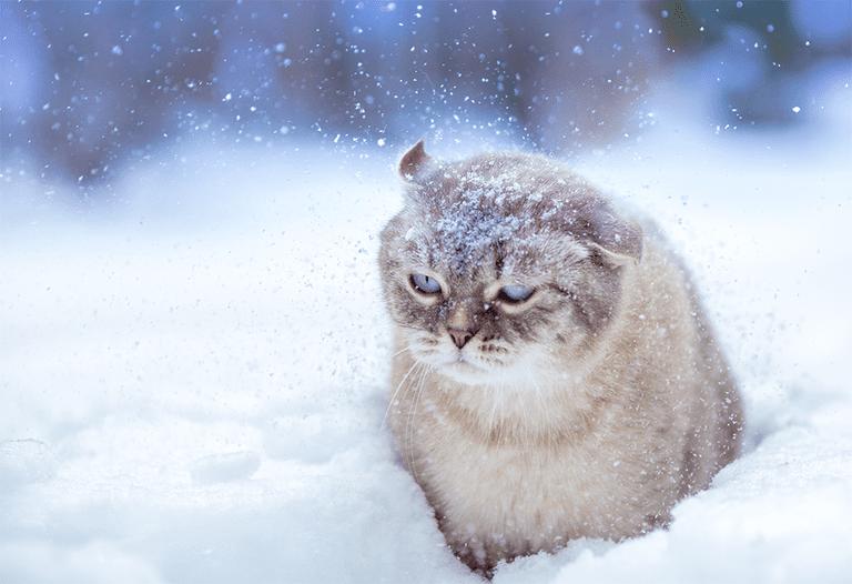 Se acerca el invierno y va a ser terrible, advierte Farmers 'Almanac
