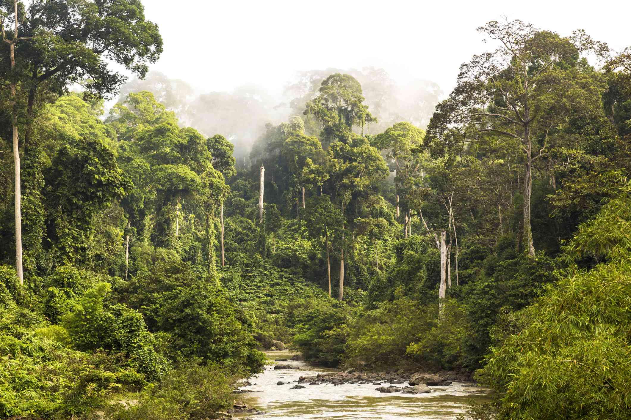 A rainforest in Sabah, Borneo, Malaysia