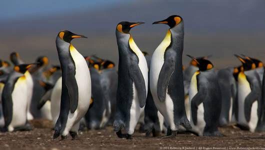 ¡Feliz Día de Concienciación sobre los Pingüinos! 5 formas en que puedes ayudar