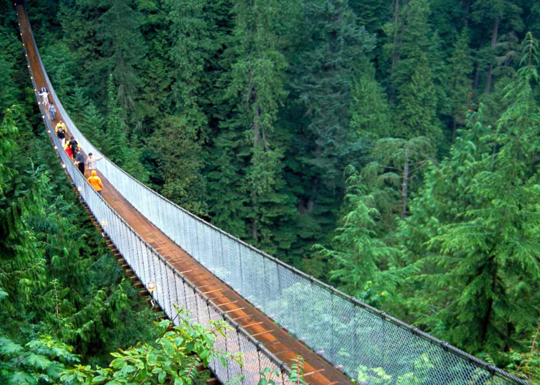 A suspension bridge crosses above a Douglas fir forest