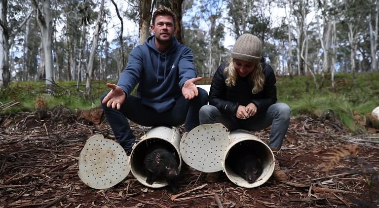 Actors Chris Hemsworth and Elsa Pataky help release Tasmanian devils into the wild on mainland Australia.