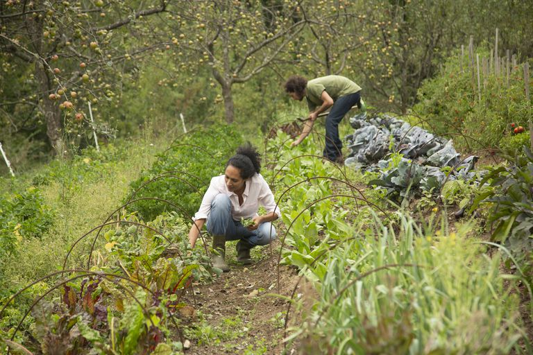 Young couple working in farm
