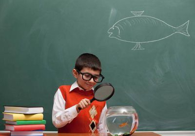 A student studying a goldfish