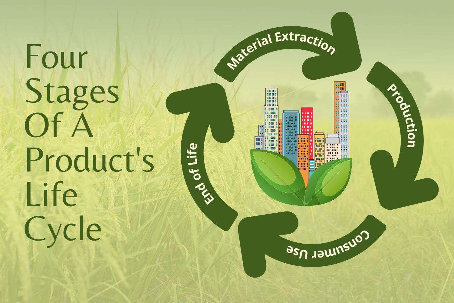 Infographic of the four stages of a product's life cycle.