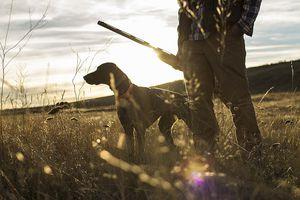 Hunting firearms and ammunition fund wildlife restoration.