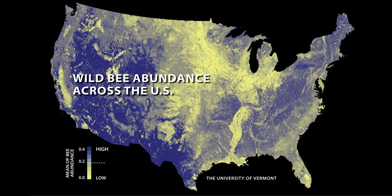 U.S. abundance of wild bees
