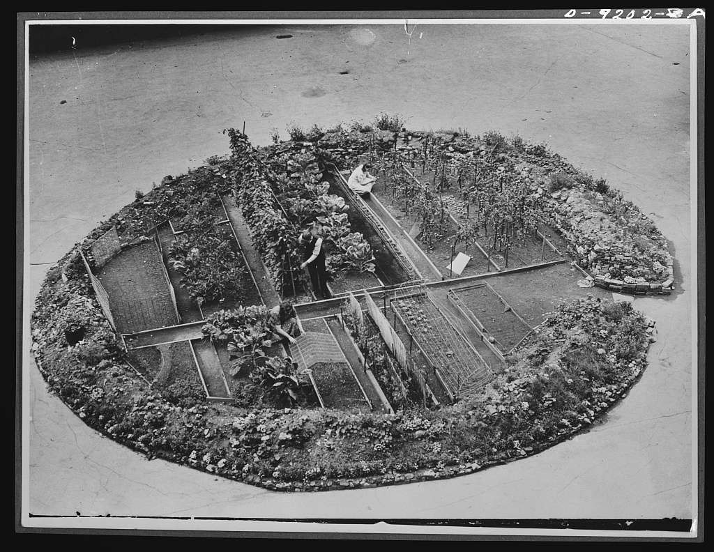 London victory garden in a bomb crater, 1943