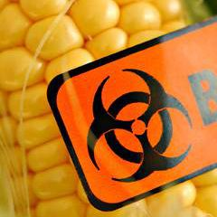 Corn with biohazard sign