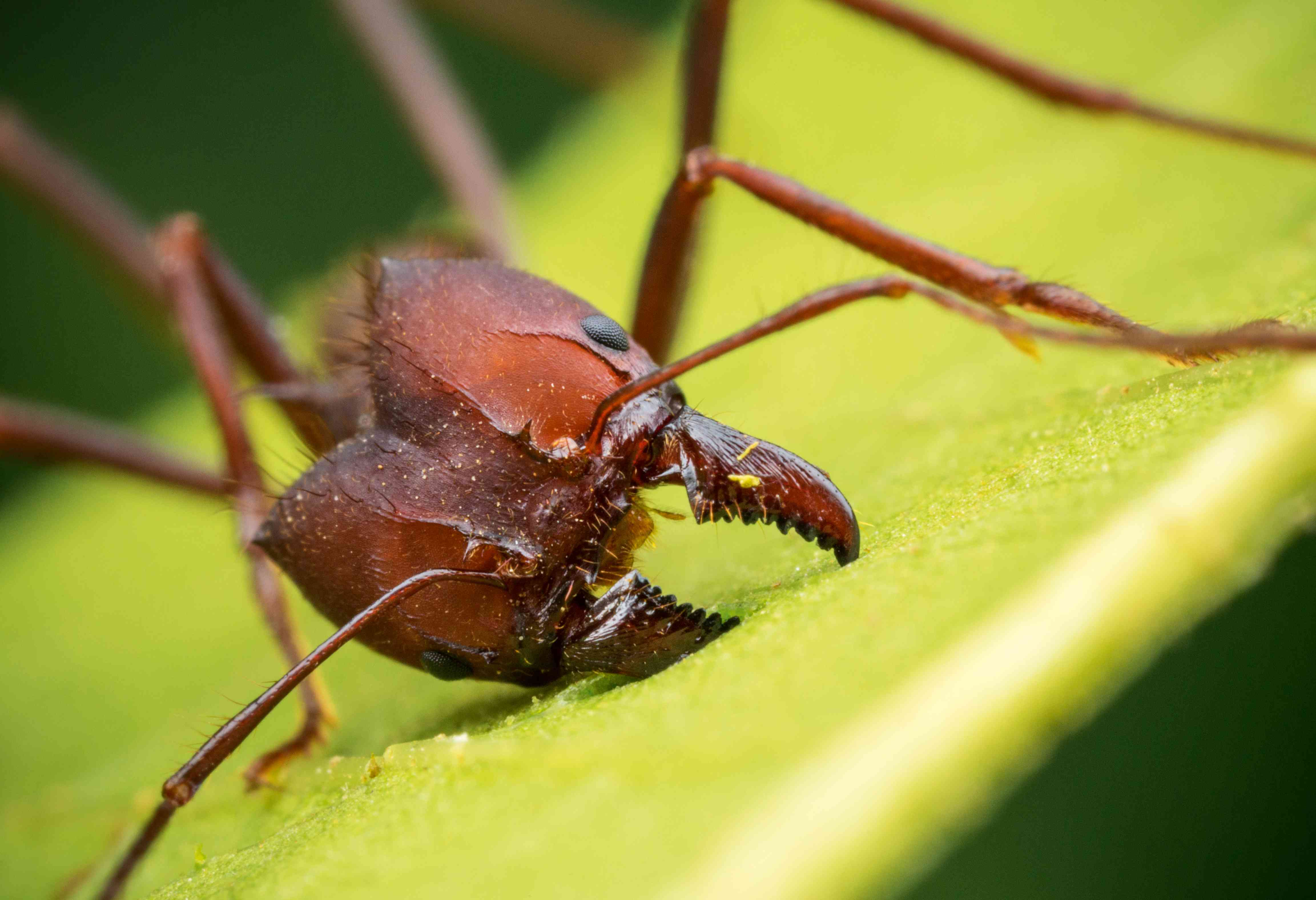 up close with an ant