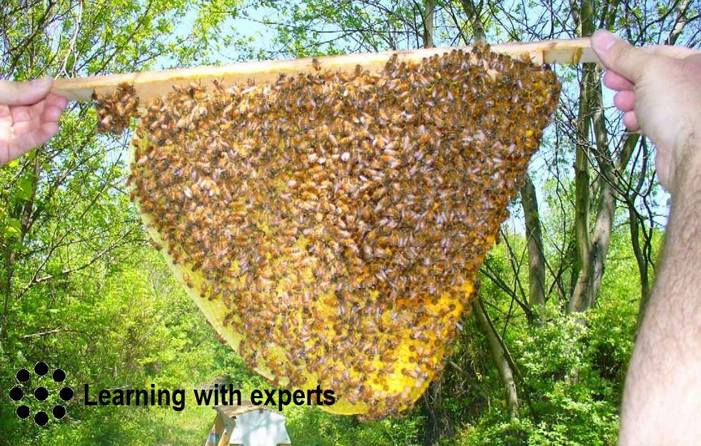 Natural Beekeeping with Philip Chandler (Learning with experts)