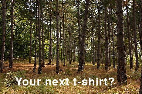 forest-next-t-shirt-photo.jpg