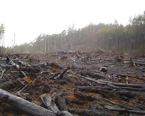 A plot of land that has been deforested