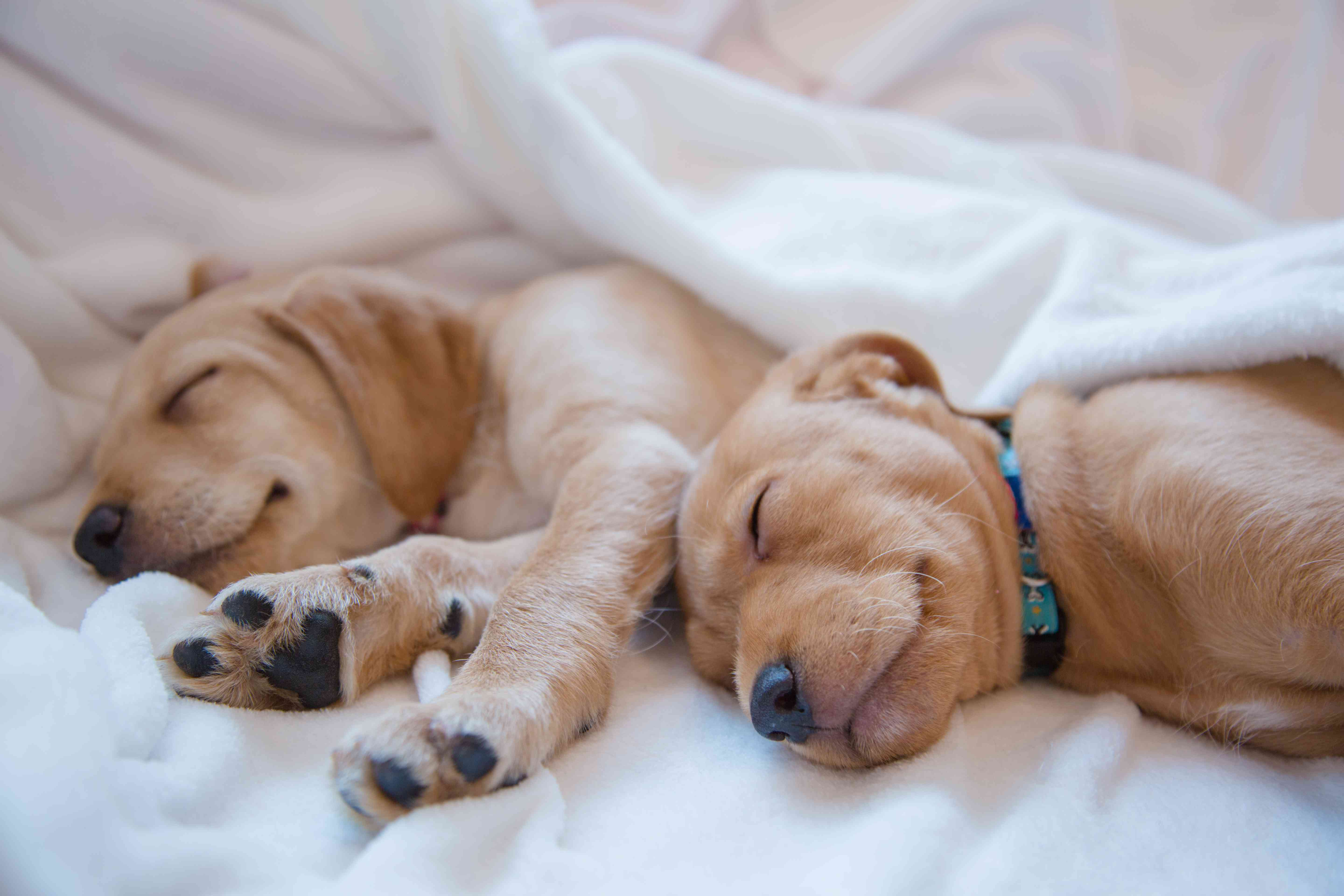 two puppies sleeping together in bed