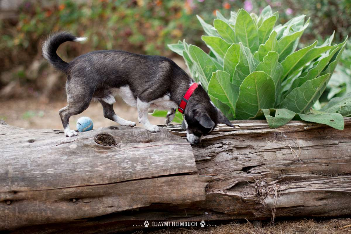 small dog on log smelling