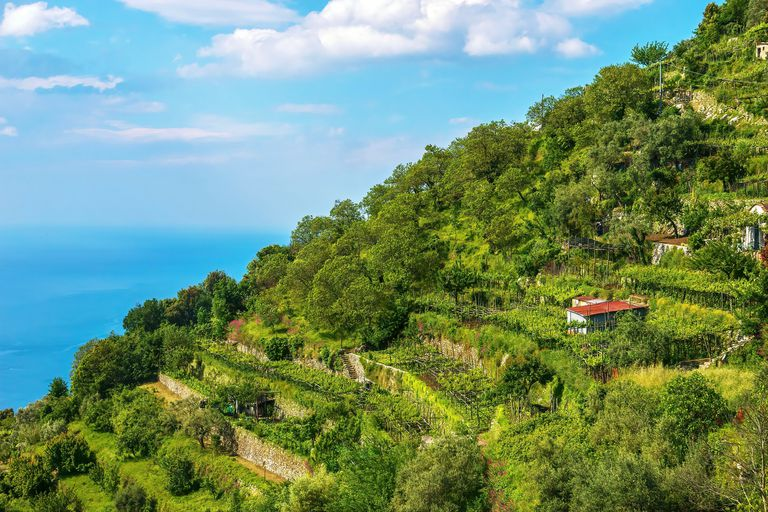 A beautiful terraced hillside containing vineyards, fruit trees and vegetable gardens, overlooking the Mediterranean Sea on the Amalfi Coast in Italy.