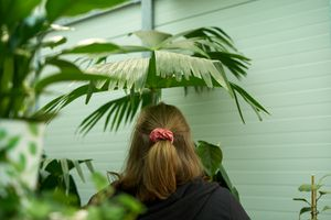 back of woman with hair scrunchie stands under large indoor palm plant