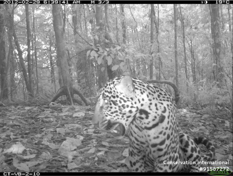 Otra razón por la que los parques nacionales son vitales para las especies en peligro de extinción