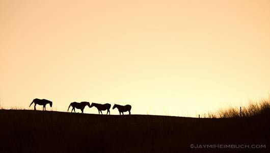 mustangs stand on a hilltop
