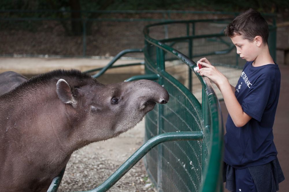 Kid taking a photo of a tapir at a zoo