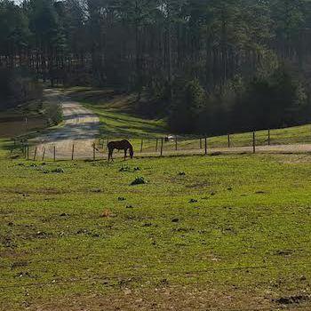 Serenbe, a down-on-the-farm New Urbanist community outside of Atlanta.