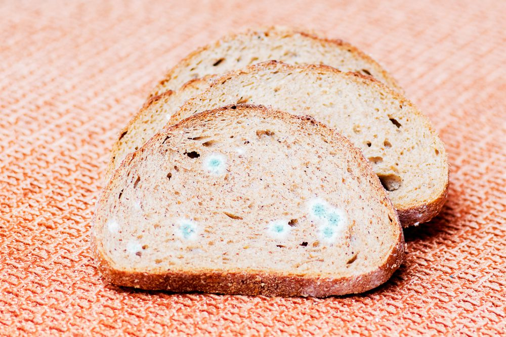 Can You Eat the 'Clean' Part of Moldy Bread?