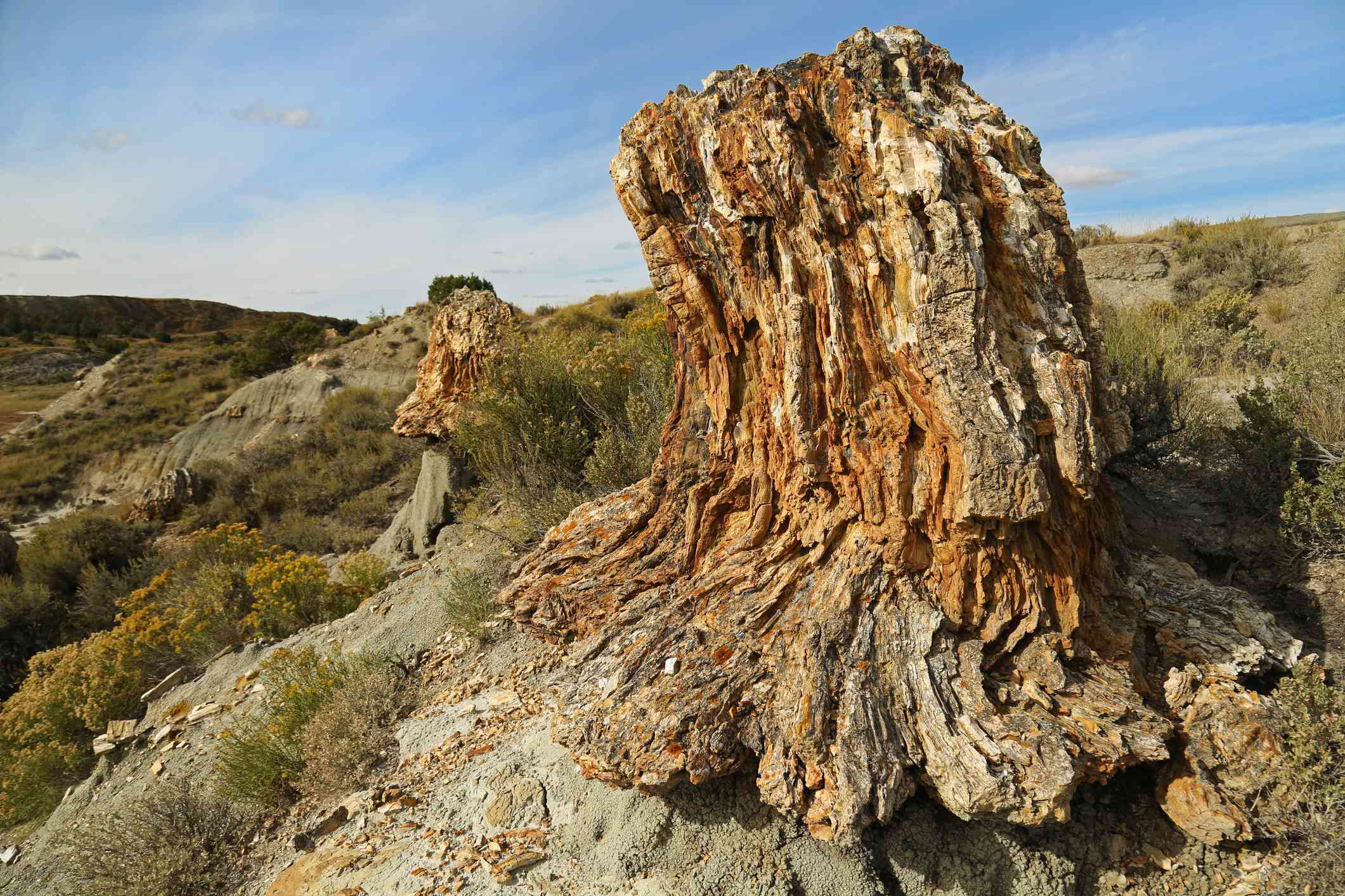 Petrified Forest of the Theodore Roosevelt National Park