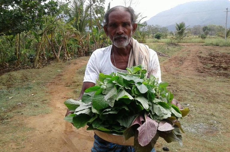 Farmer with basket of harvested crop