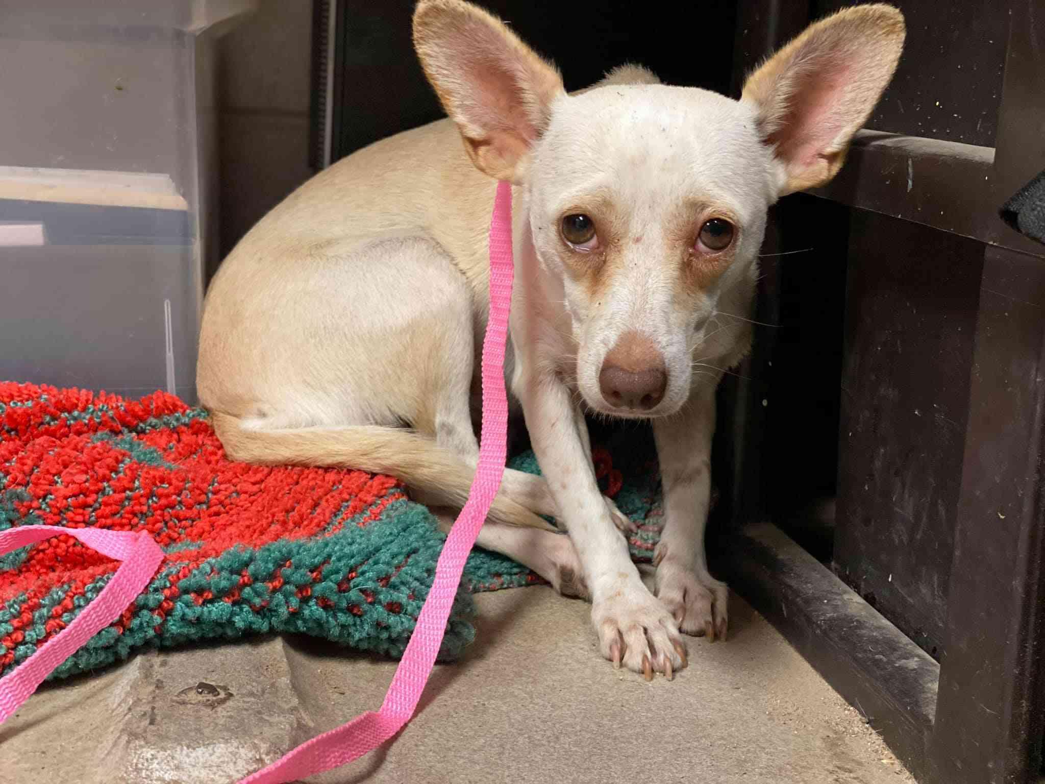 scared dog in animal shelter