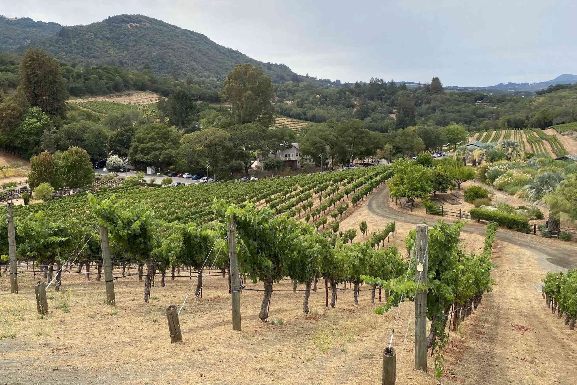 Benziger Winery, Sonoma County