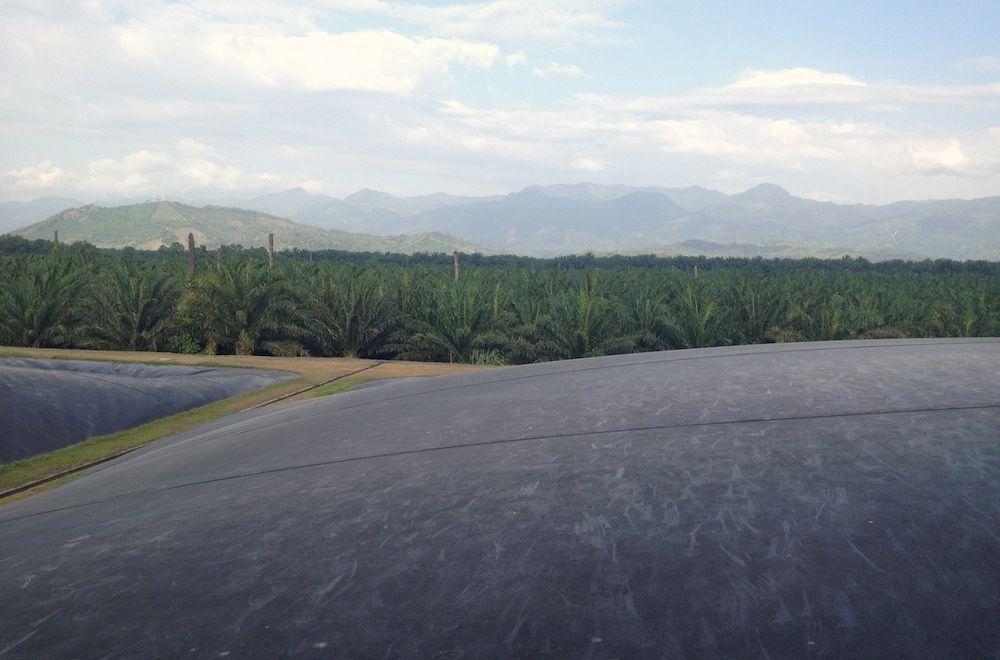 bio-digestors capture methane at a palm oil processing facility