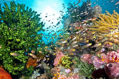 A green, pink, yellow, and orange coral reef teaming with fish and colors.