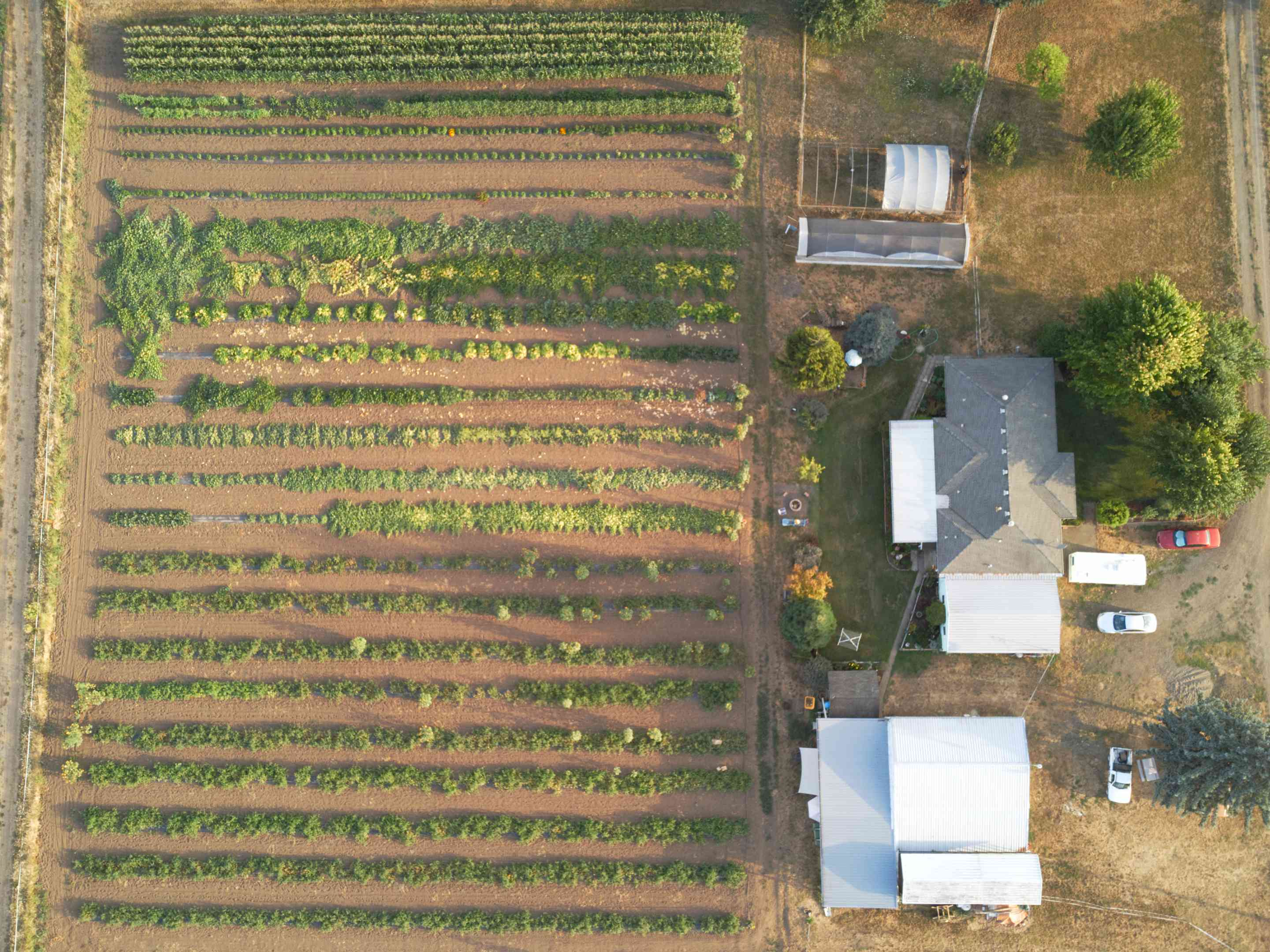 birds eye view of small farm with multiple rows of vegetables planted