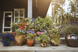 container garden with flowers
