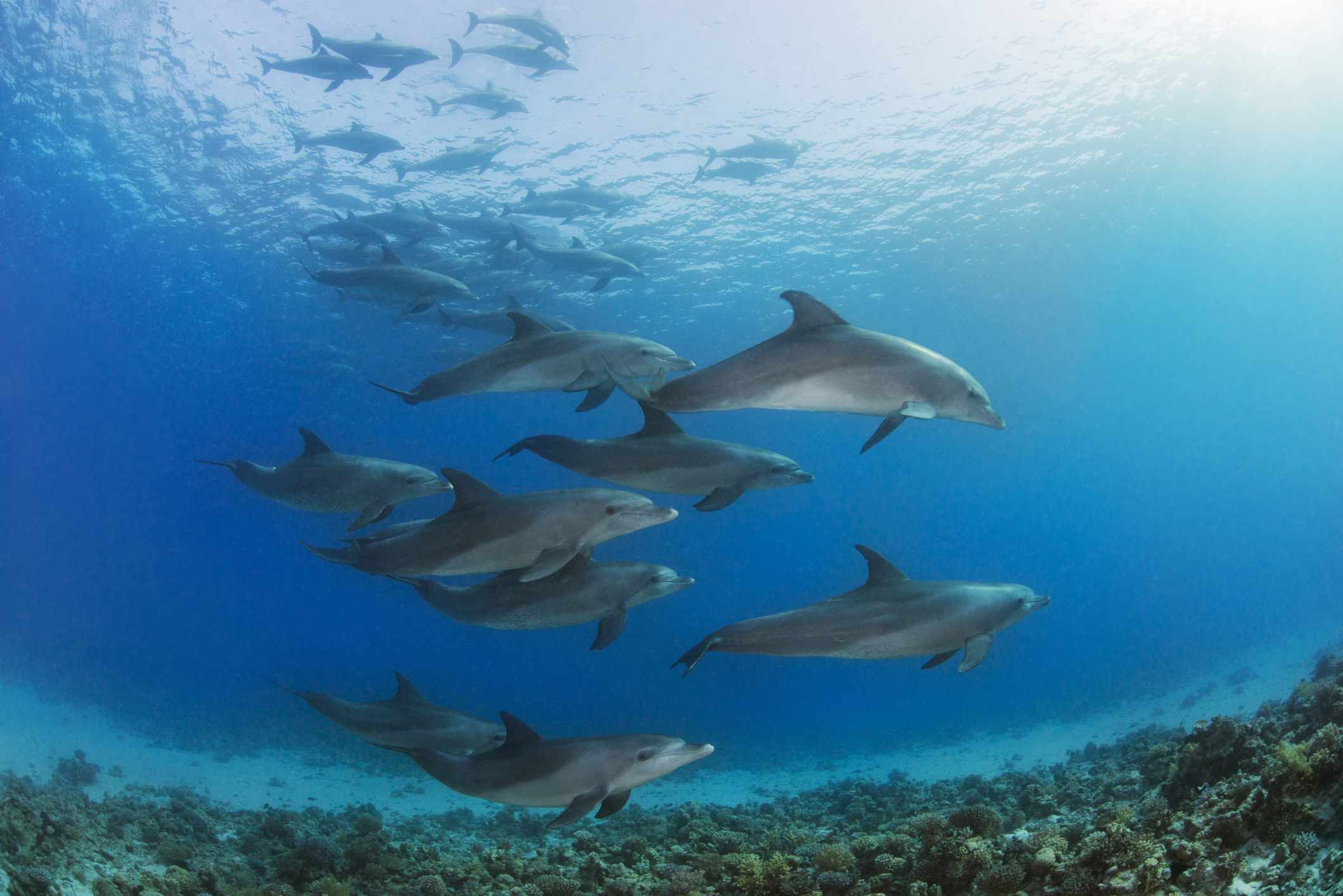 group of dolphins swimming close underwater
