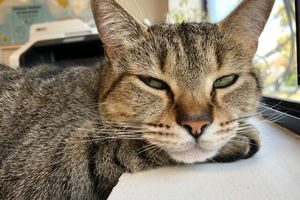 Close-up of cat with half-closed eyes