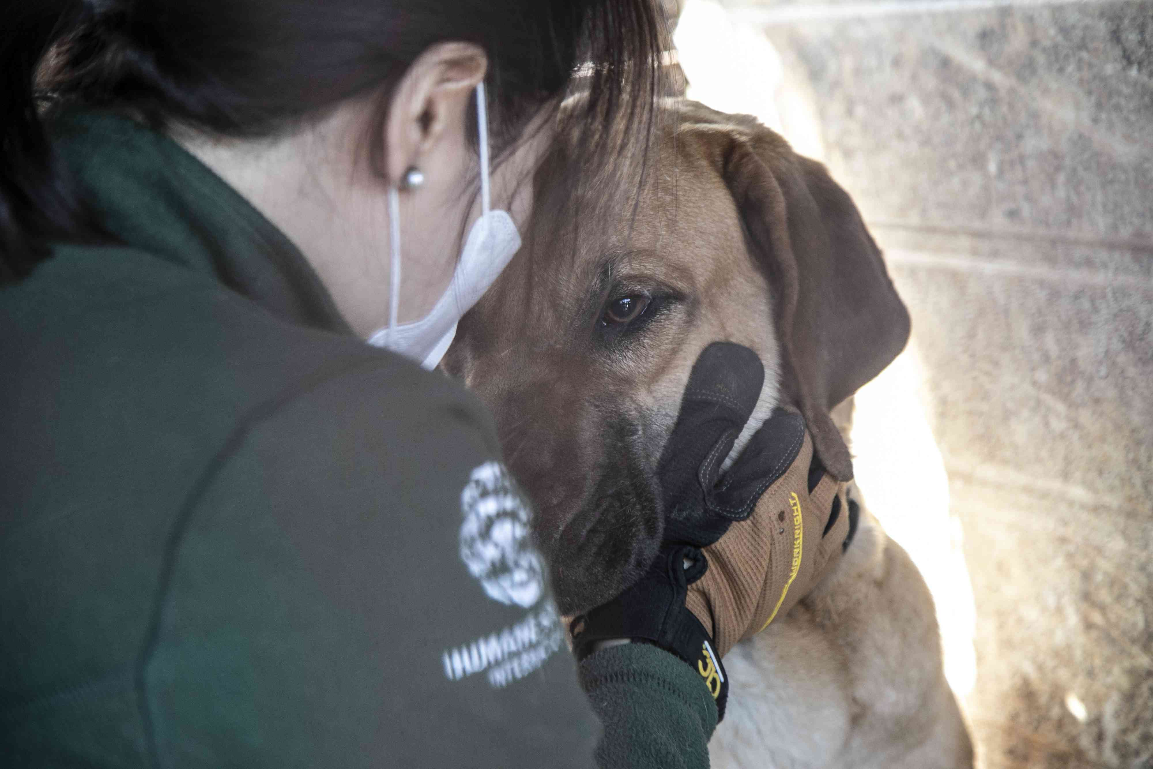 Dog is comforted at former dog meat farm