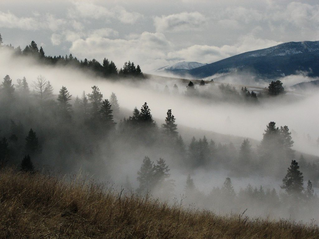 7 Types of Fog You Didn't Know Had Names