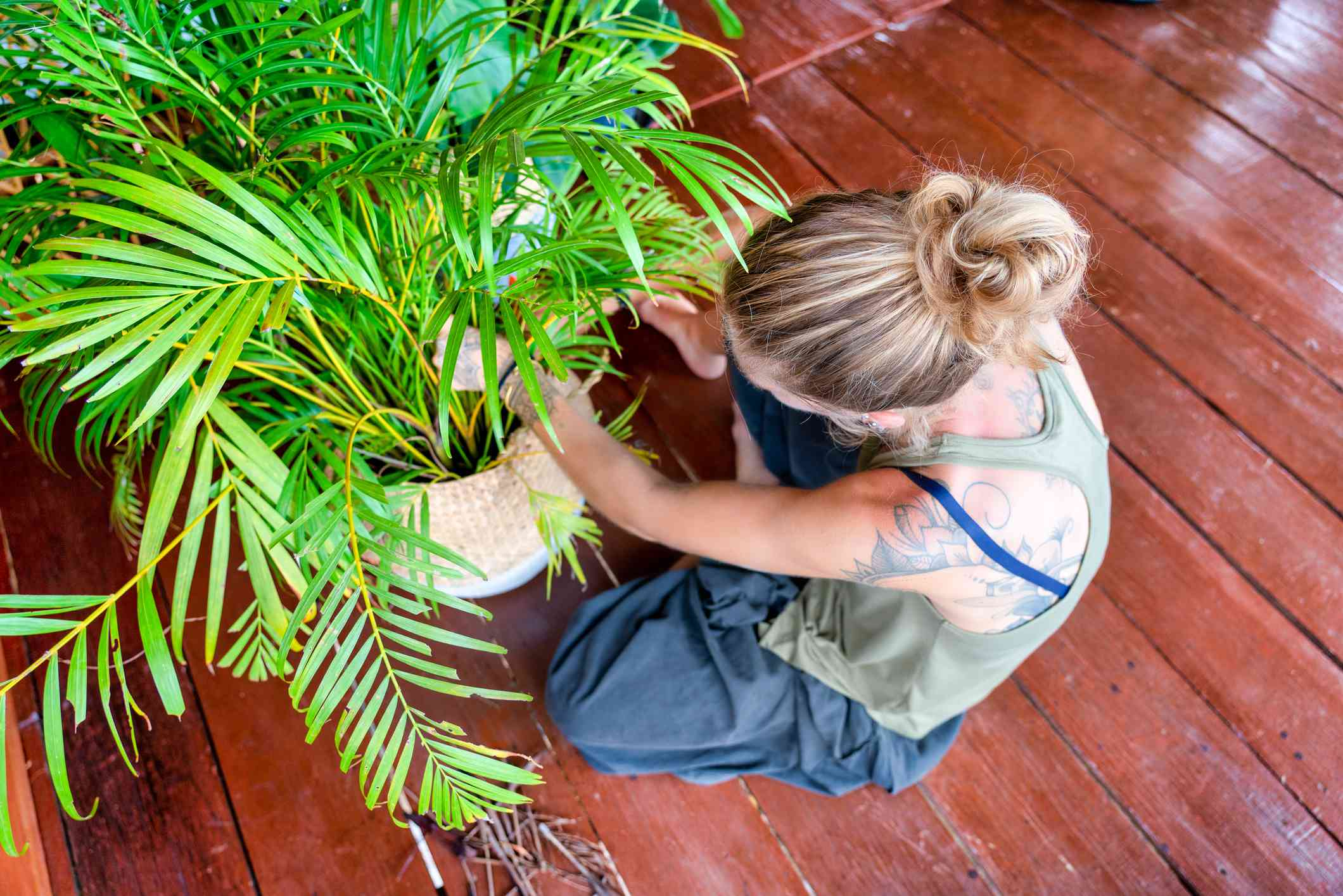 woman pruning a parlor palm
