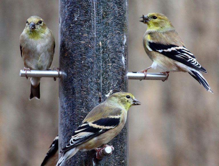 ¿Deberías alimentar a las aves en invierno?