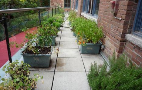 george restaurant garden photo