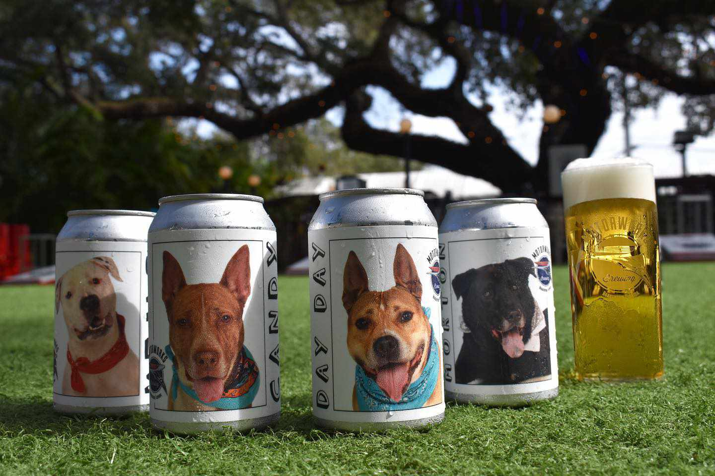 adoptable dogs on beer cans