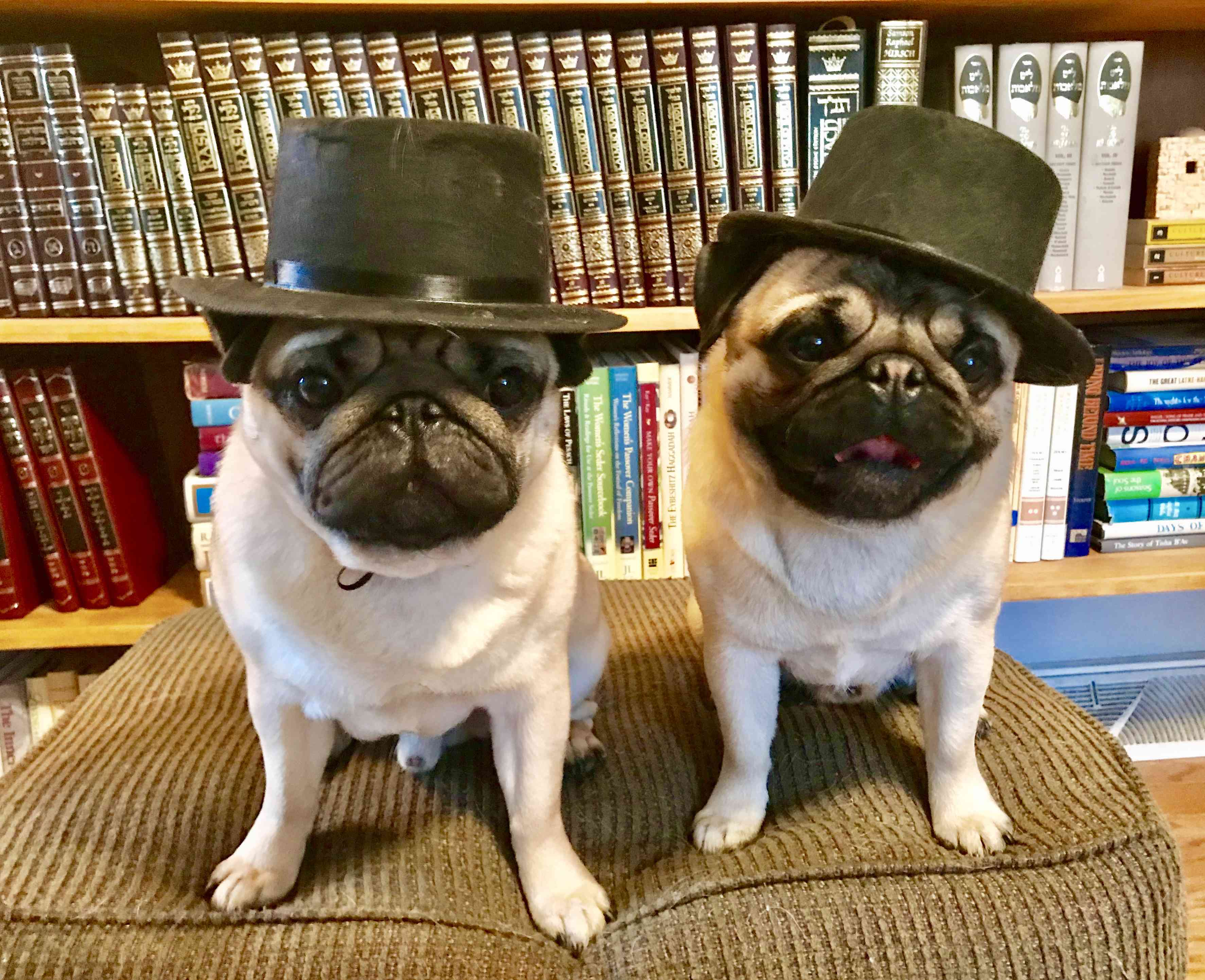 Fergus and Spike ... or is it Spike and Fergus?