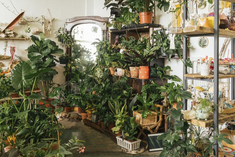 Assortment of plants in a showroom