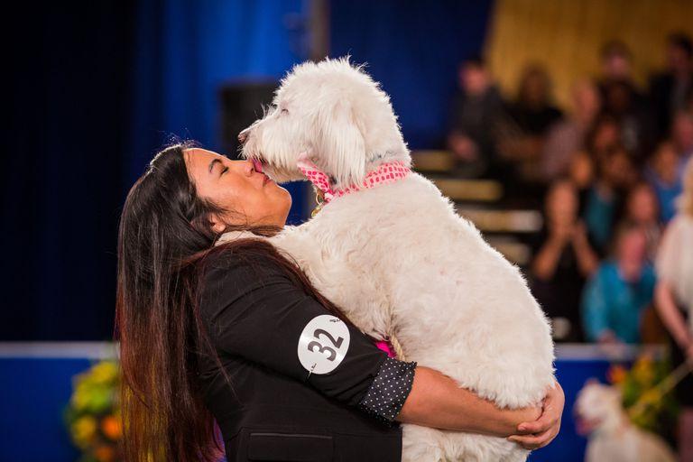 Cachorros de rescate se lucen en su propia exposición canina