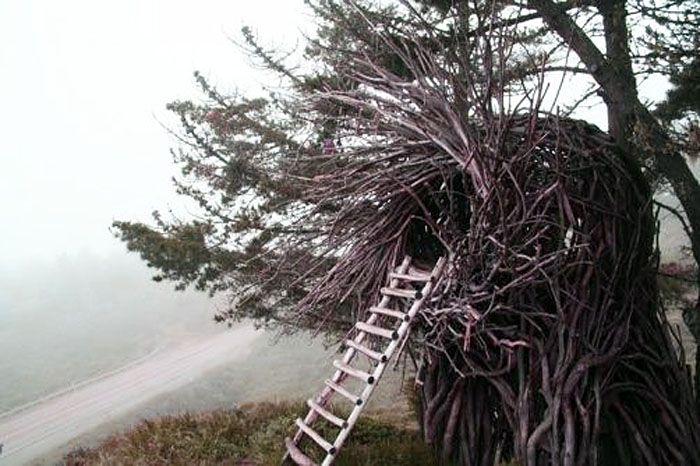 Jayson Fann tree nests