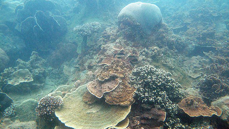Los arrecifes de coral de Singapur son súper resistentes, según un estudio